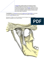Es la articulación entre el hueso temporal y la mandíbula.docx4.docx