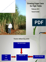 Growing Sugar Cane for High Yields