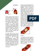 Doenças do Sistema Circulatório1