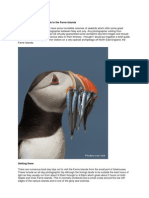 A Bird Photographers Guide to the Farne Islands by Rich Steel