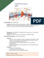 fisiologa celular