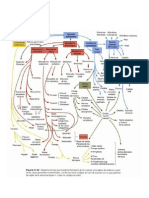 Cuadro Embrio.pdf
