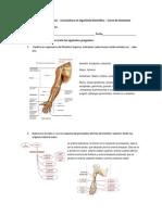 3er examen anatomia.docx