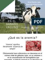 Anemia No Regenerativa en Vacuno