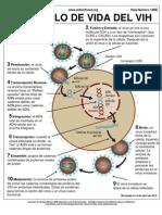 Ciclo de Vida Del VIH 2