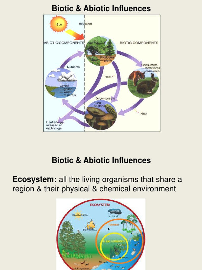 what is biotic components