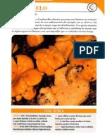 41192732-Cantharellus-cibarius.pdf