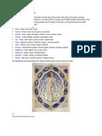 Western Medical Astrology Model