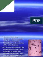 Corynebacterium - Grupo Bacteria No - a