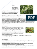 Tiglio.pdf