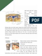Anatomi Kepala