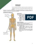 03- Generalidades Del Esqueleto y Los Huesos