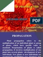Plant t Propagation Methods