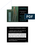 Anatomofisiologia Gd b1 Aula3