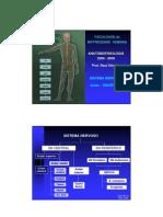 Anatomofisiologia Gd b1 Aula5