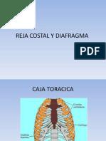 1. Reja Costal y Diafragma