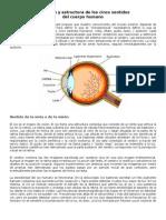 Anatomía y estructura de los cinco sentidos.docx