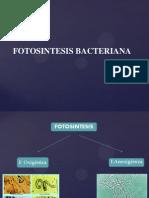 fotosintesis bacteriana