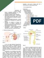 Fisiologia Renal - Resumo