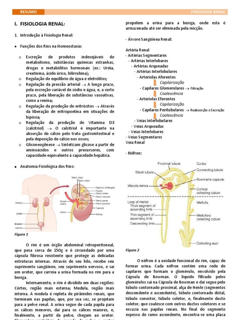 Fantástico Anatomía Renal Y La Fisiología Pdf Patrón - Imágenes de ...