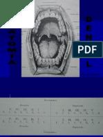 Anatomia Central-canino