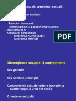 Cromatina sexuala definitie