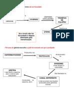gâmetas e suas caracteristicas regulação hormonal (1)