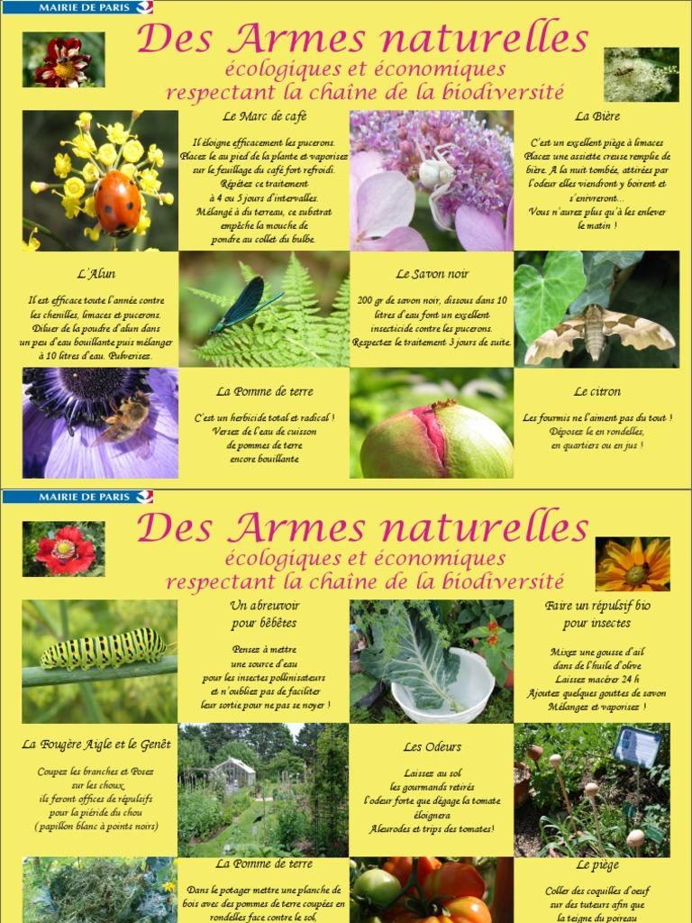 Bicarbonate De Soude Contre Les Pucerons des armes naturelles | insecticide | plantes