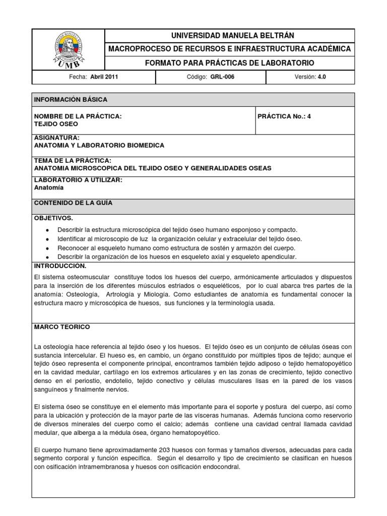 Lujoso La Práctica De Laboratorio De Anatomía Ilustración - Anatomía ...