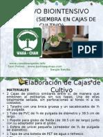 PresentaciónCajasCultivo