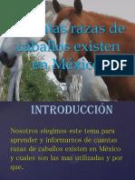 Cuantas razas de caballos existen en México