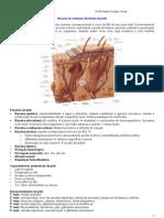 02- Anátomo-fisiologia da Pele