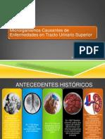 ITUS Pielonefritis (microbiología clínica)
