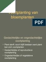 Voortplanting Van Bloemplanten
