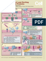 Import and Sorting of Mitocondrial Proteins