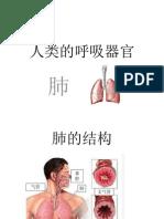 人类的呼吸器官