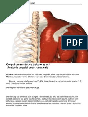 formă centrală subțire a corpului