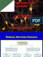 Sistema Nervioso Humano-GTP