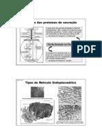 07-Trafego Proteinas Reticulo Endoplasm - 2012