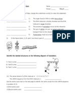 RNA and Protein Synthesis Quiz