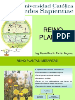 Clase Plantae