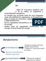 Presentacion metabolismo
