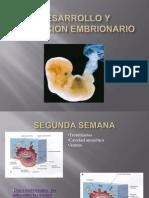 Desarrollo y Evolucion Embrionario Dm
