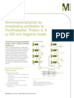Immunoprecipitation by crosslinking antibodies to PureProteome™ Protein A, G or A/G mix magnetic beads