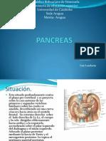 PANCREAS.pptx