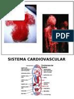 28482536 Sistema Cardiovascular