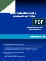 Clase 3 Neuroplasticidad Neurodesarrllo y Funciones Cognitivo Emocionales Dr Lips 1220243802813375 8