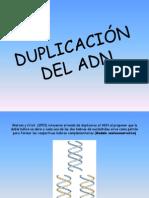 Duplicacion Adn Interactiva