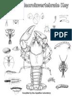 Aquatic Macroinvertebrate Key