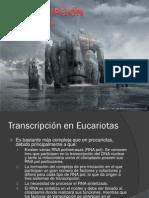 RNA Pol I Y Pol II.pdf